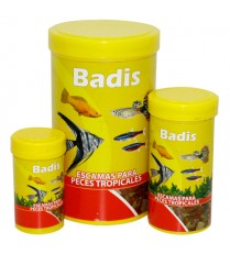 BADIS ESCAMA TROPICAL