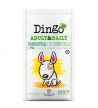 DINGO ADULT & DAILY