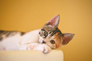 comida gatos esterilizados