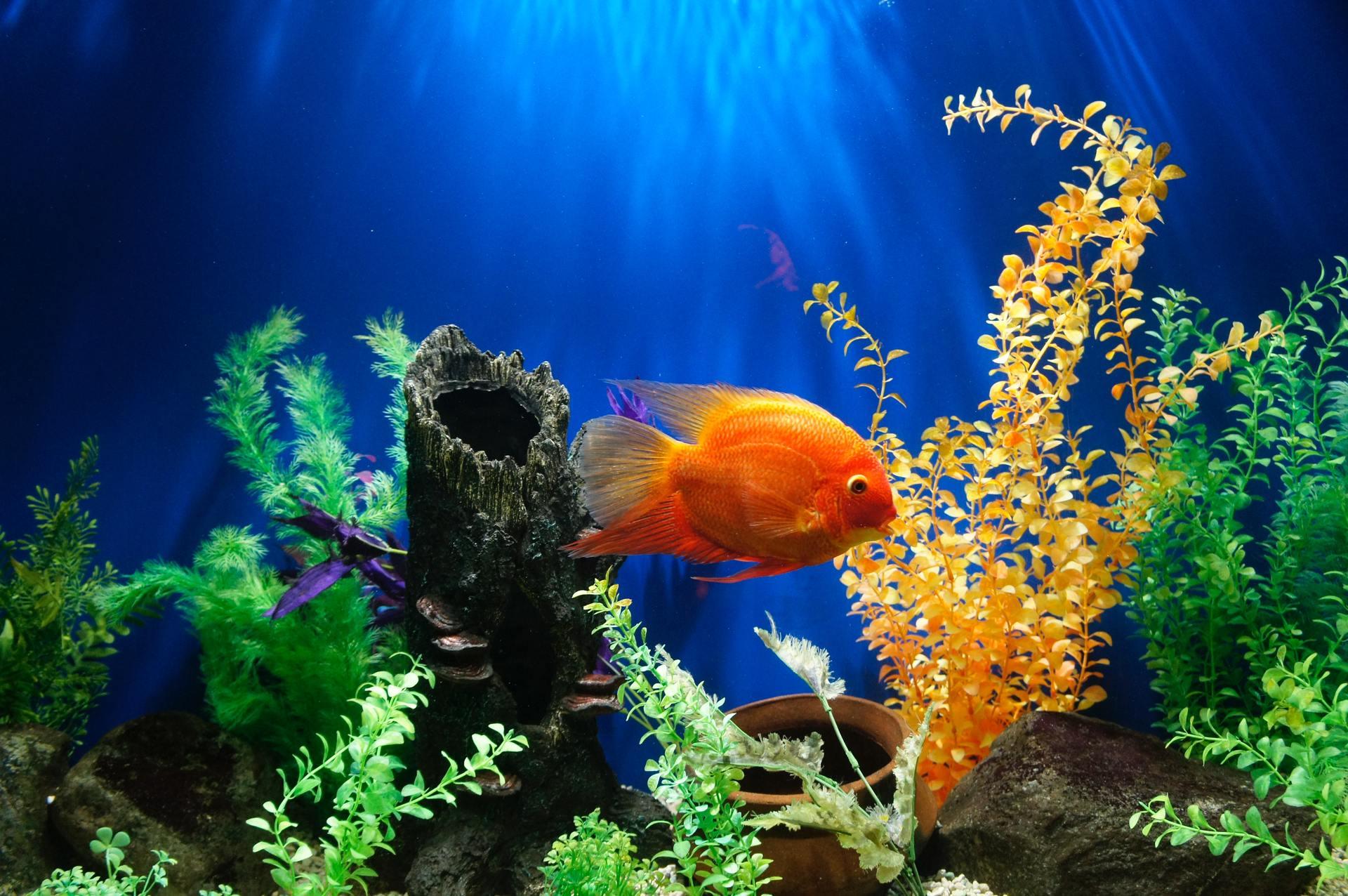 comprar acuario