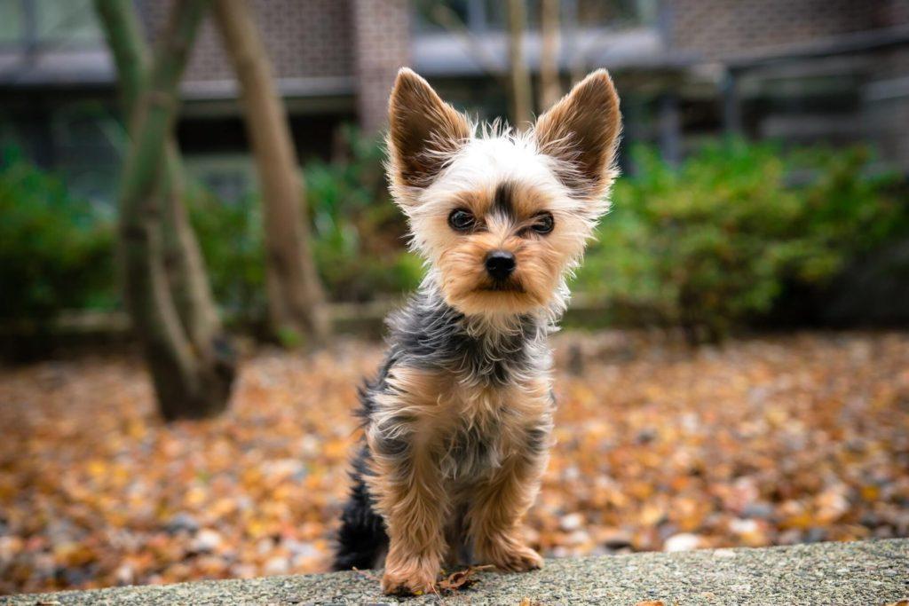 Transportin para perros pequeños
