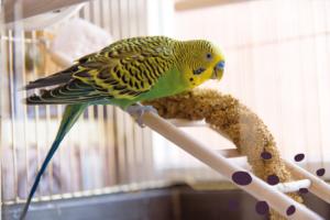 Alimentación en aves domésticas