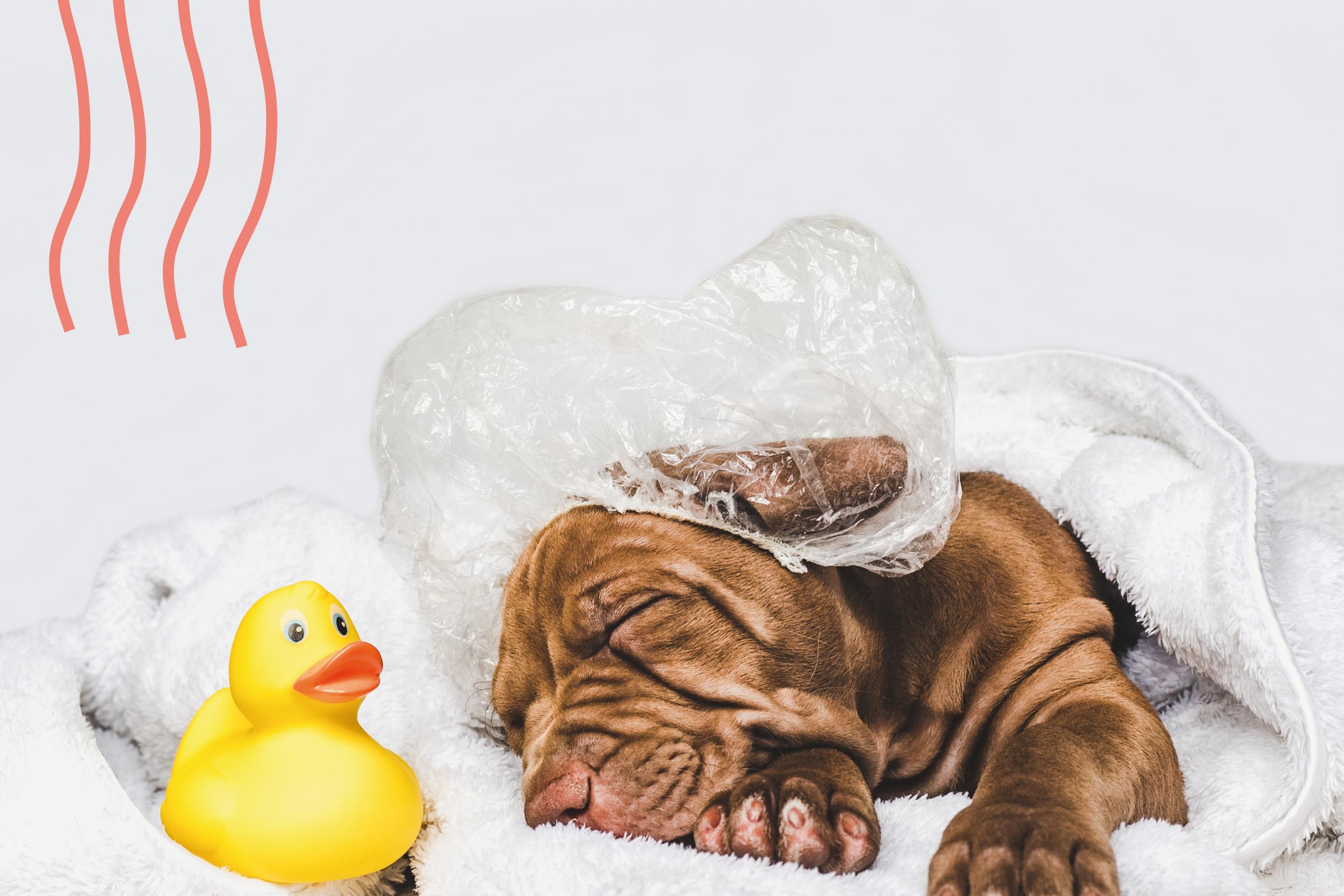 Como bañar a un perro