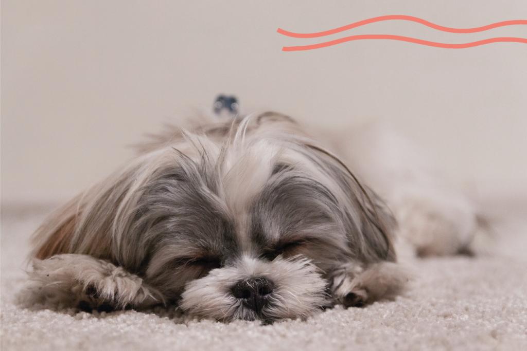 Como duermen los perros