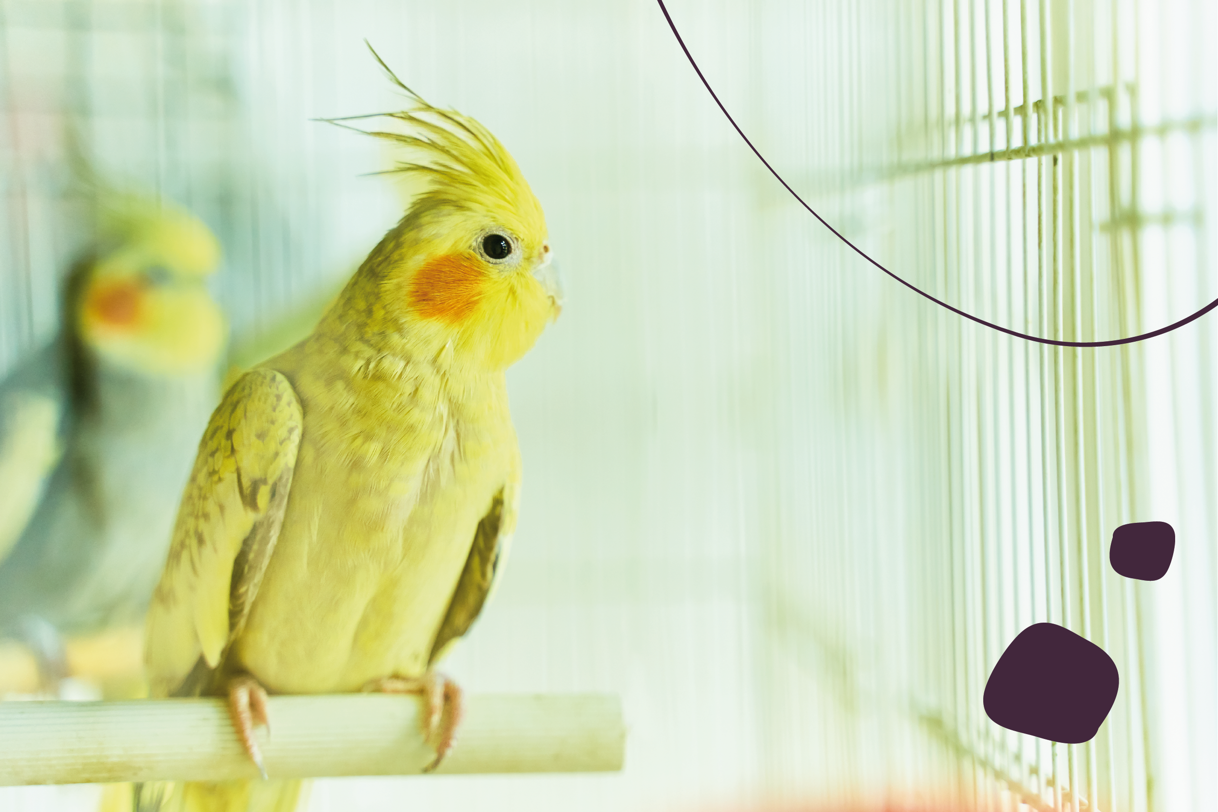 Elegir la mejor jaula para aves