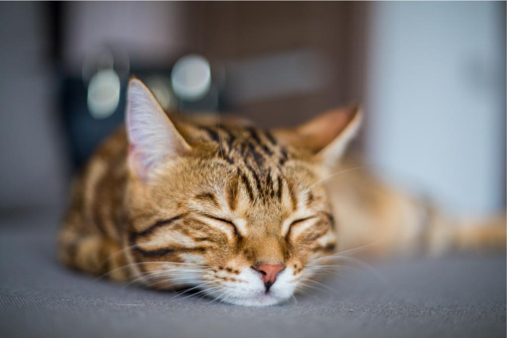 Vacunas para gatos