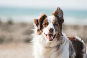 Combatir el calor en perros 5 productos imprescindibles