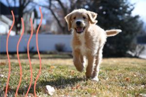 Elegir juguetes para perro