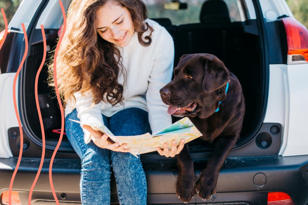 Viajar con mascotas en coche