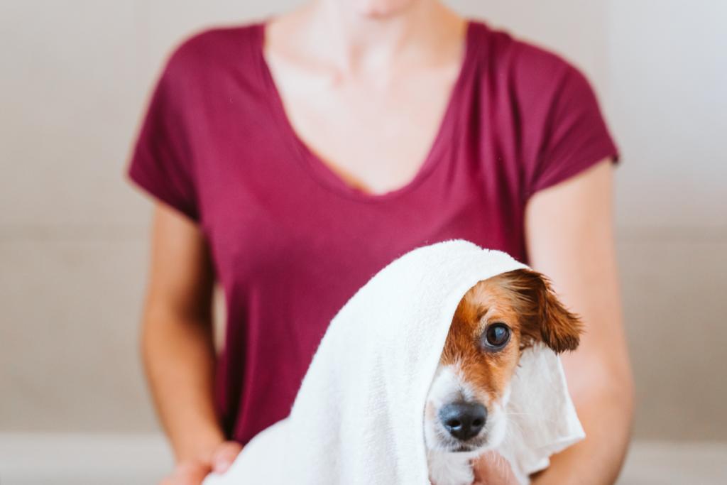 Elegir el mejor champú para perros