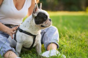 Como poner un arnés a un perro