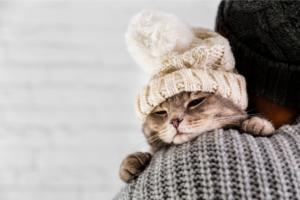 El pelaje de los gatos en invierno