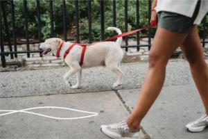 Salir de paseo con tu perro