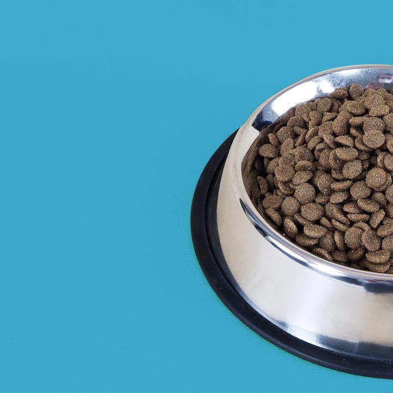 Cachorro comida perro