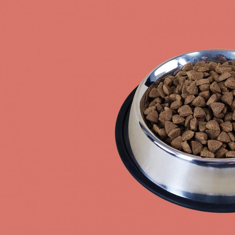 Salmón comida perro