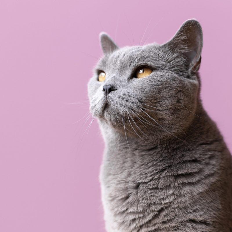 nutriplus gato comida